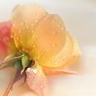 My Rose and Me by Cynthia Harris