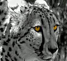 Eyes of a Cheetah by Steven  Agius