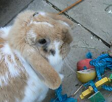 playful bunny by AngelaFoster