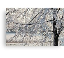 Hoarfrost on branches of a tree Canvas Print