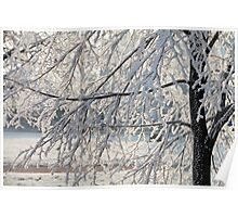Hoarfrost on branches of a tree Poster