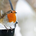 Robin in snowscene by Andrew Jones