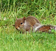 baby squirrel by AngelaFoster