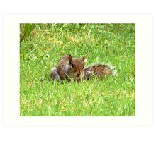 baby squirrel on garden Art Print