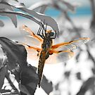 THE DRAGONFLY by Pinhead Industries