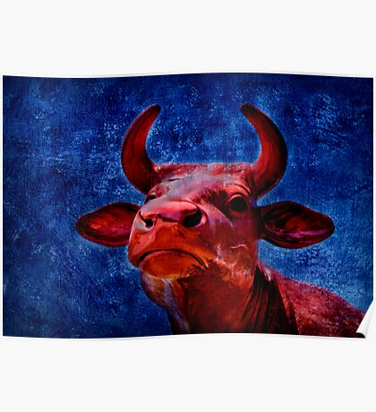 Red cow Poster