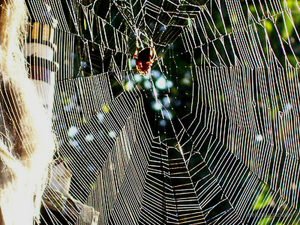 spider web by melynda blosser