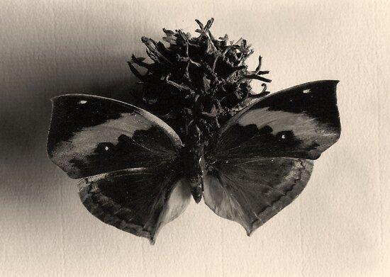 Very Still Life #3 by transmute
