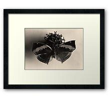 Very Still Life #3 Framed Print