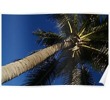 Cable Beach Coconut Palm Poster