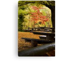 Autumn Canopy Canvas Print