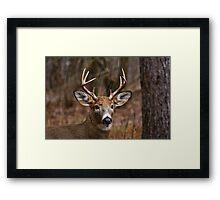 Deer Buck - Ottawa, Ontario - 1 Framed Print