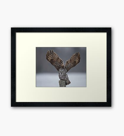 Mighty wings... Framed Print