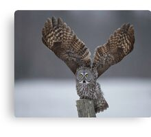 Mighty wings... Canvas Print