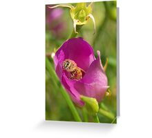 Ligurian Bee  Greeting Card