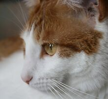Rowdy Cat.  by KBdigital