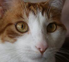 Rowdy Cat II by KBdigital