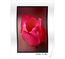 HOT PINK TULIP Poster