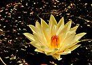 Unfolding the romance of Light - For Ushna by Prasad