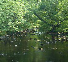 A Brook Runs Through It by Raam Shanker