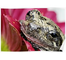 Gray tree frog 2 Poster