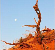 Outback Tree by Rochelle Boardman