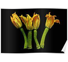 zucchini flower II Poster
