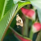 butterfly tropic by lisa9
