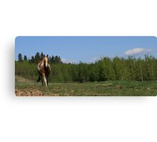 Chico in the Country Canvas Print