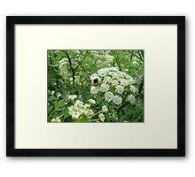 nectar collector Framed Print