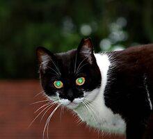 Green Eyes by lletizia