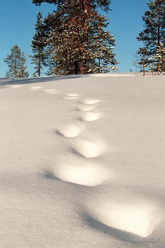 God's footprints by Sally R