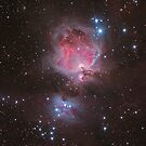 The Orion Nebula by Phil Hart