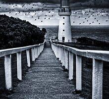 The Birds by Alistair Wilson