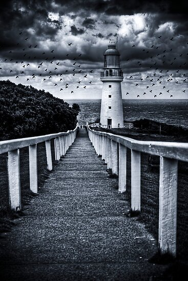 The Birds by Alistair Wilson