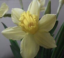 Spring by sharron-shoot