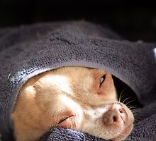 Sleeping Rat Dog by snorman
