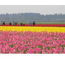 Picking Flowers. Photographic Print
