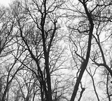 Wintery Trees by nativeminnow