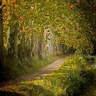 Path in the light by Jacinthe Brault