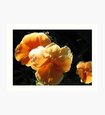 Apricot Pansies Art Print