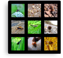 A Little Bug Collection Canvas Print