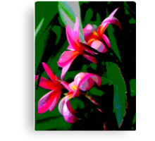 Tropical Frangipanis Canvas Print