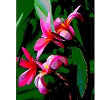 Tropical Frangipanis Photographic Print