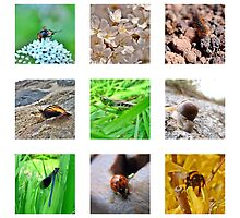 A Little Bug Collection by FrauleinimStall