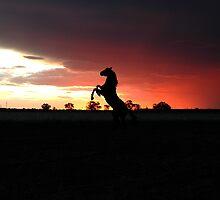 storm horse by Melanie Atkins