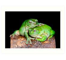 Australian Green Tree Frog [Litoria caerulea] Art Print