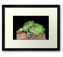 Australian Green Tree Frog [Litoria caerulea] Framed Print