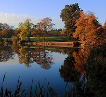 Hillsborough Lake by Wrayzo