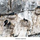 Nesting Cormorans by Jacinthe Brault